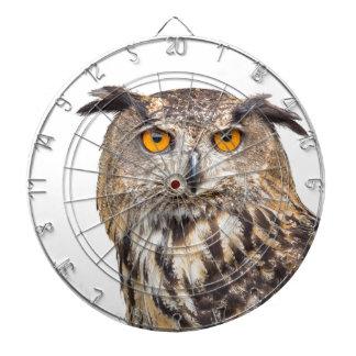 Portrait of eagle owl on white dartboards