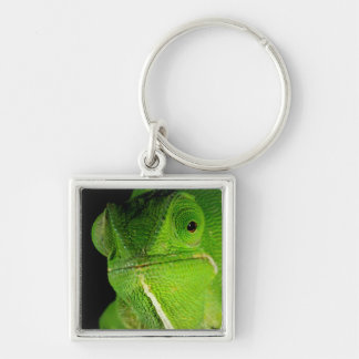Portrait Of Flap-Necked Chameleon Silver-Colored Square Keychain