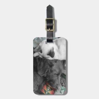 Portrait Of Friendship Photograph Luggage Tag
