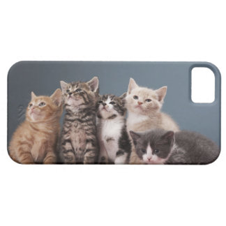Portrait of group of kittens case for the iPhone 5