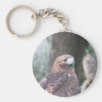 Portrait of hawk over a nature blurred background basic round button keychain