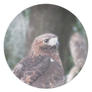 Portrait of hawk over a nature blurred background party plates