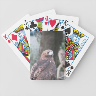 Portrait of hawk over a nature blurred background poker deck