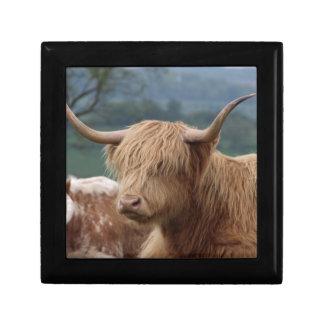 portrait of Highland Cattle Gift Box