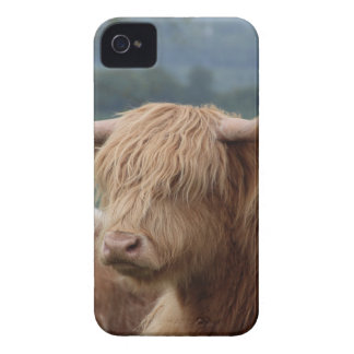 portrait of Highland Cattle iPhone 4 Case-Mate Case