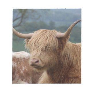 portrait of Highland Cattle Notepad