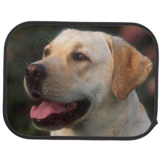 Portrait Of Labrador Retriever, Hilton Car Floor Carpet