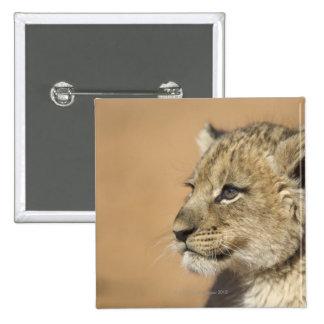 Portrait of Lion cub (Panthera Leo), Namibia Pin