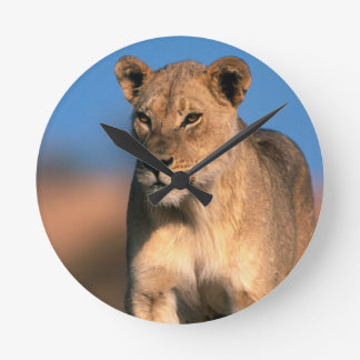 Portrait Of Lioness (Panthera Leo) Round Clock
