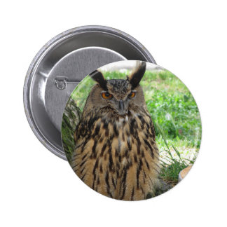 Portrait of long-eared owl . Asio otus, Strigidae 2 Inch Round Button