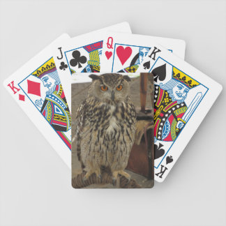 Portrait of long-eared owl . Asio otus, Strigidae Bicycle Playing Cards