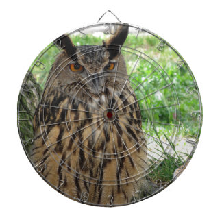 Portrait of long-eared owl . Asio otus, Strigidae Dartboard