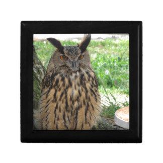 Portrait of long-eared owl . Asio otus, Strigidae Gift Box