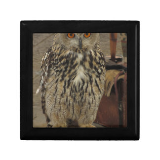 Portrait of long-eared owl . Asio otus, Strigidae Gift Box