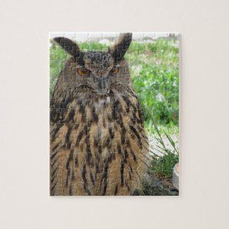 Portrait of long-eared owl . Asio otus, Strigidae Jigsaw Puzzle