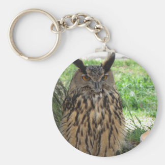 Portrait of long-eared owl . Asio otus, Strigidae Keychain