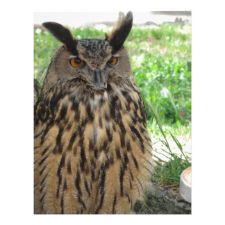 Portrait of long-eared owl . Asio otus, Strigidae Letterhead