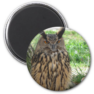 Portrait of long-eared owl . Asio otus, Strigidae Magnet