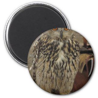 Portrait of long-eared owl . Asio otus, Strigidae Magnet