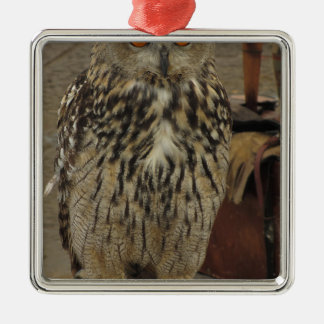 Portrait of long-eared owl . Asio otus, Strigidae Metal Ornament