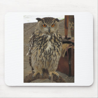 Portrait of long-eared owl . Asio otus, Strigidae Mouse Pad