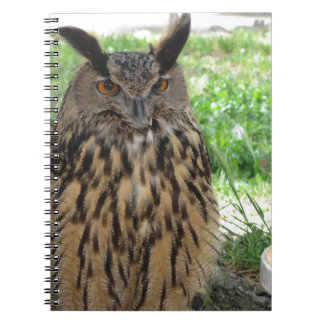 Portrait of long-eared owl . Asio otus, Strigidae Notebooks