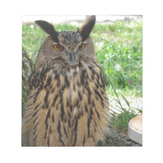Portrait of long-eared owl . Asio otus, Strigidae Notepad