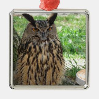Portrait of long-eared owl . Asio otus, Strigidae Silver-Colored Square Ornament