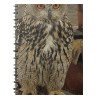 Portrait of long-eared owl . Asio otus, Strigidae Spiral Notebook
