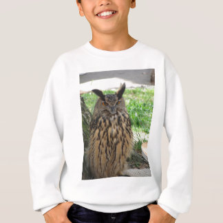Portrait of long-eared owl . Asio otus, Strigidae Sweatshirt