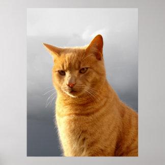 Portrait of Merlin the ginger cat Poster
