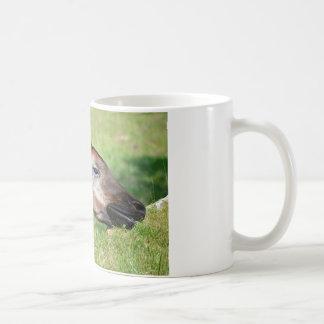 Portrait of okapi eating grass coffee mug