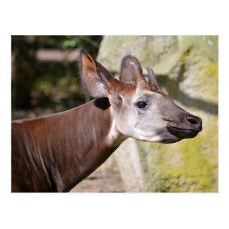Portrait of okapi postcard