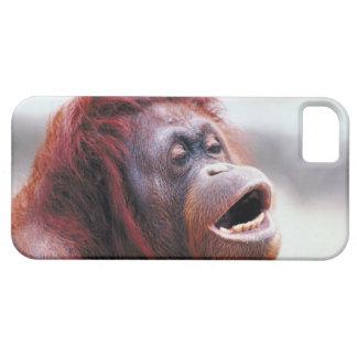 Portrait of orangutan iPhone 5 cover
