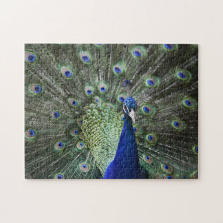 Portrait Of  Peacock With Feathers Out Jigsaw Puzzle