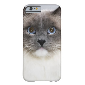 Portrait of Ragdoll cat Barely There iPhone 6 Case