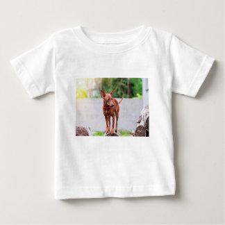Portrait of red miniature pinscher dog baby T-Shirt