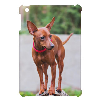 Portrait of red miniature pinscher dog case for the iPad mini