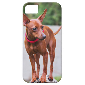 Portrait of red miniature pinscher dog case for the iPhone 5