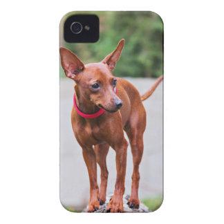 Portrait of red miniature pinscher dog Case-Mate iPhone 4 case