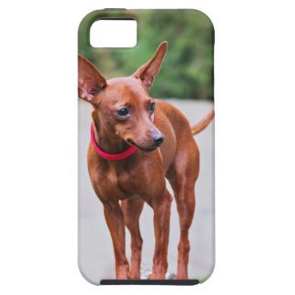 Portrait of red miniature pinscher dog iPhone 5 cover