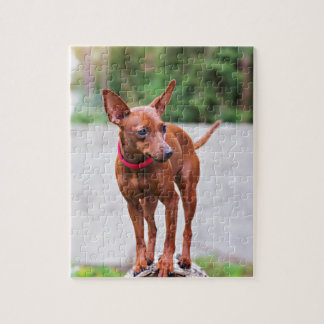 Portrait of red miniature pinscher dog jigsaw puzzle