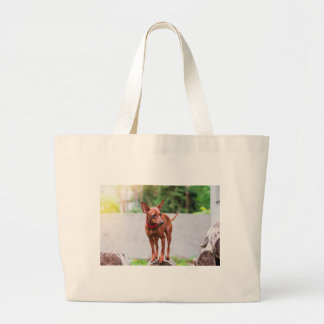 Portrait of red miniature pinscher dog large tote bag