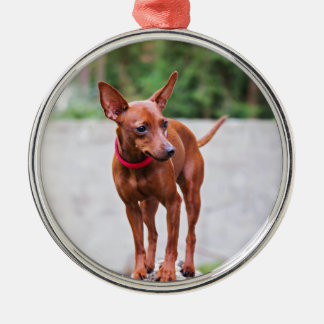 Portrait of red miniature pinscher dog metal ornament