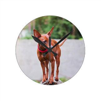 Portrait of red miniature pinscher dog round clock