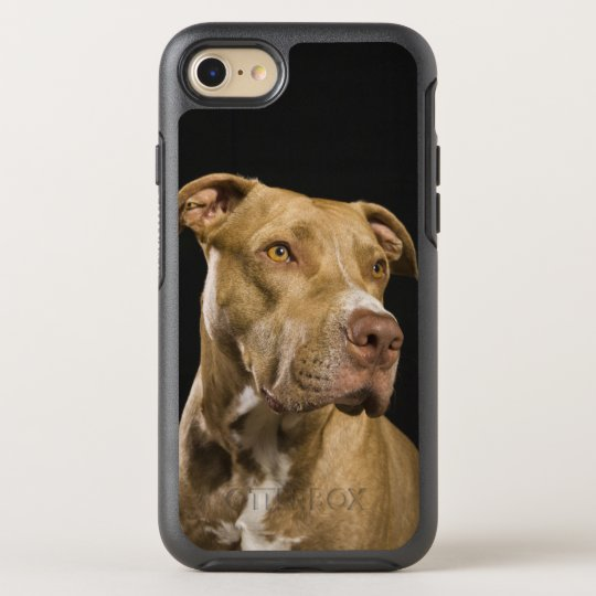 Portrait of red nose pitbull with black OtterBox symmetry iPhone 7 case
