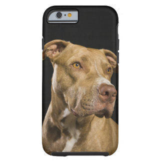 Portrait of red nose pitbull with black tough iPhone 6 case