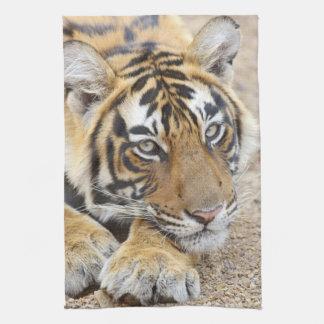 Portrait of Royal Bengal Tiger, Ranthambhor 4 Kitchen Towel