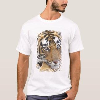Portrait of Royal Bengal Tiger, Ranthambhor 4 T-Shirt