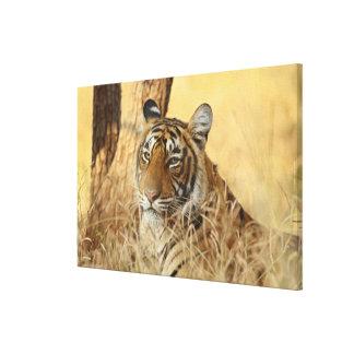 Portrait of Royal Bengal Tiger, Ranthambhor Canvas Prints